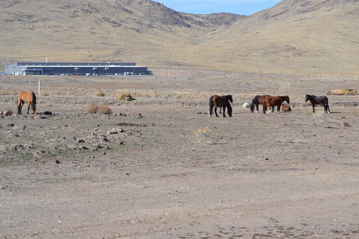 wilde Mustang