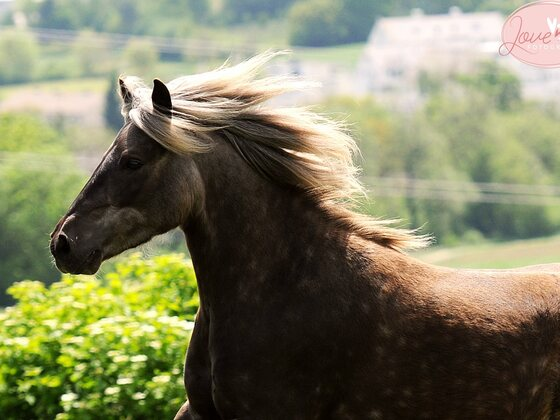 Mein Classic Pony