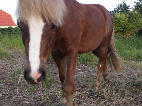 Monty, das Pony meiner Nachbarin.