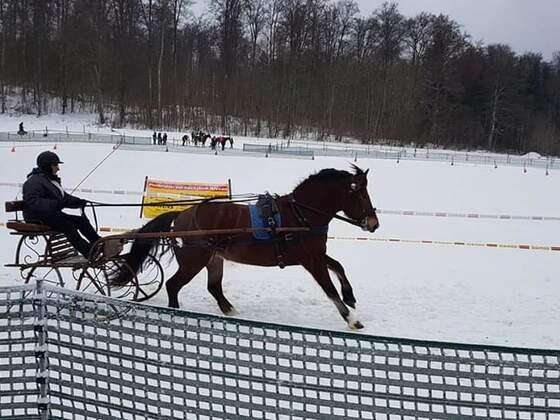 Skijöring und Schlittenrennen am 3.2.2019 in Trochtelfingen