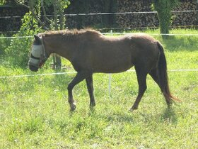 Tiere 10.8.2011 082