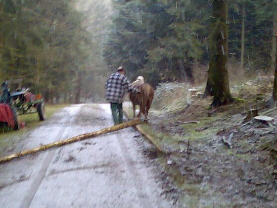 Ritschy bei der Waldarbeit