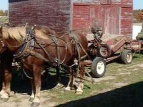 Heu-Ernte bei den Amischen in Süd-Michigan