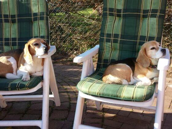 Meine geprüften Rettungshunde