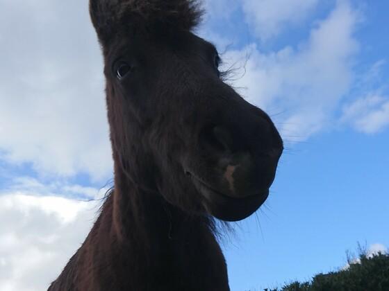 Die Ponys