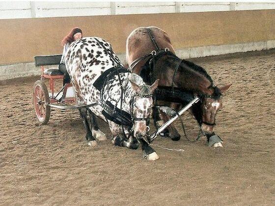 Gute Pferde