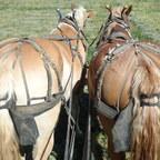 Pferdeäpfel-Sammler im Einsatz beim Schwaden
