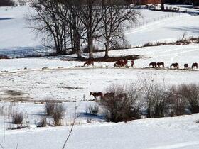 Die Herde beim Fressen