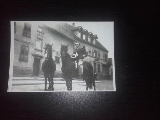 Panje Pferde