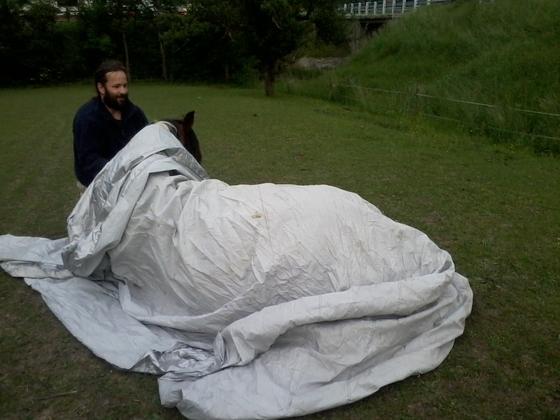 Pferd verpacken 3