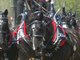 Horseshow near Edmonton 09 045