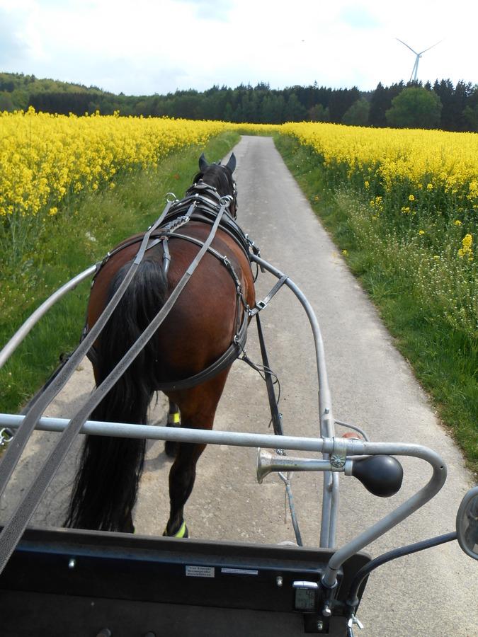 Ausfahrt im Hunsrück Mai 2014