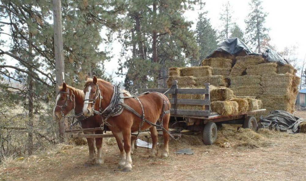Sunny und Nel vorm Wagen nach dem Beladen