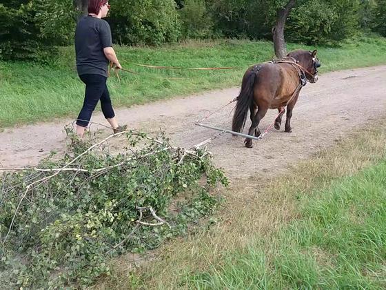 Ponypower