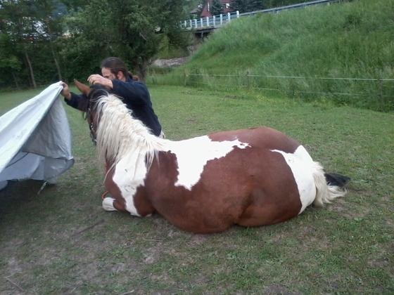 Pferd verpacken 1