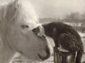 Liebe kann sooo schön sein